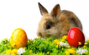 rabbit-easter-eggs