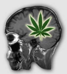 marijuana_skull