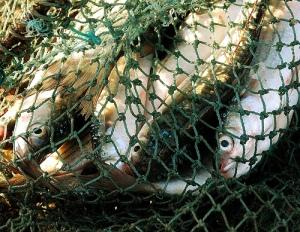 Fish_nets